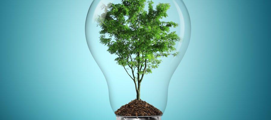 Время зеленых технологий: рейтинг лучших экологических стартапов, которые принесли миллиарды их создателям и инвесторам и имеют очень радужное будущее.